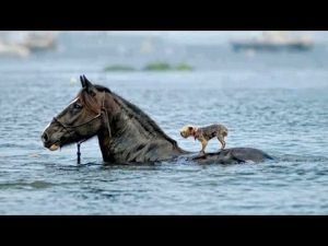 Animal Heroes 4 (Best Edition) | Animal Saves And Helps Other Animal – YouTube